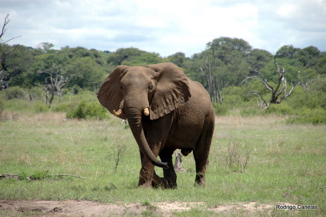 To see an Elephant in nature...Incredible!!!